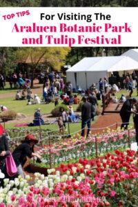 Top Tips for visiting Araluen Botanic Park and Tulip Festival