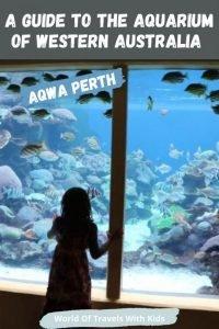 A Guide To The Aquarium Of Western Australia – AQWA Perth Aquarium