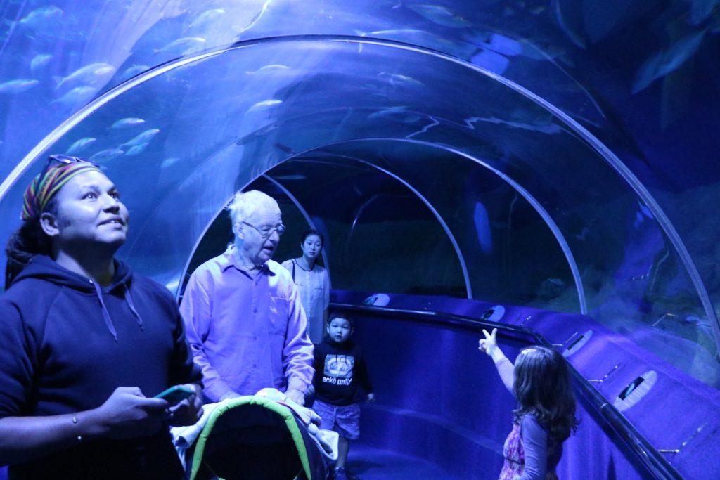 A Guide To The Aquarium Of Western Australia - AQWA Perth Aquarium