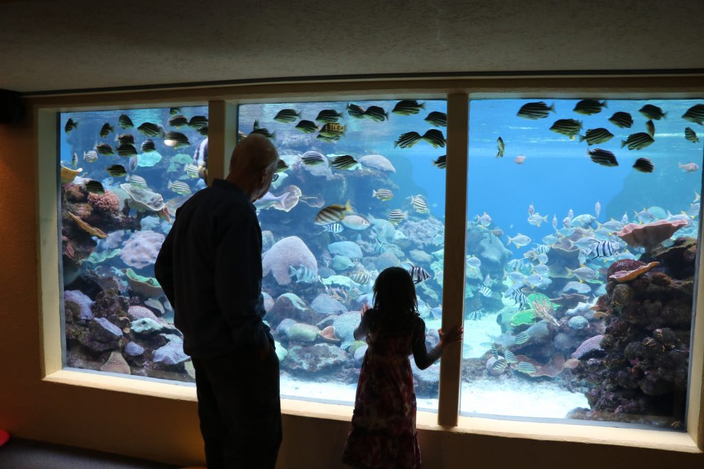 Visiting AQWA, Aquarium of WA with Kids, Tips to visit Aquarium of Western Australia with Kids