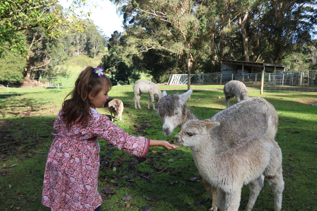 Things to do in Denmark Western Australia
