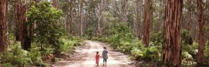 Things to do in Margaret River Western Australia with kids