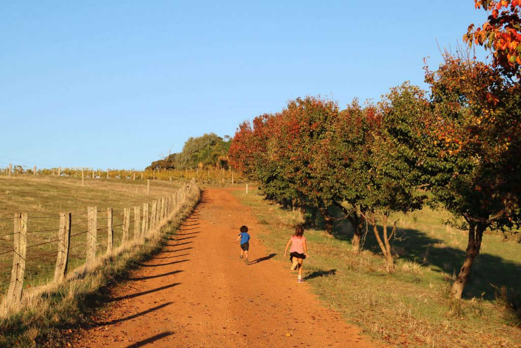 Children running around an Australian farm