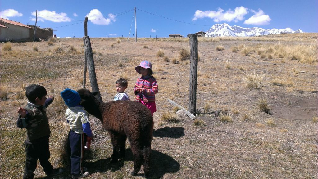 kids-in-peru-alpacas