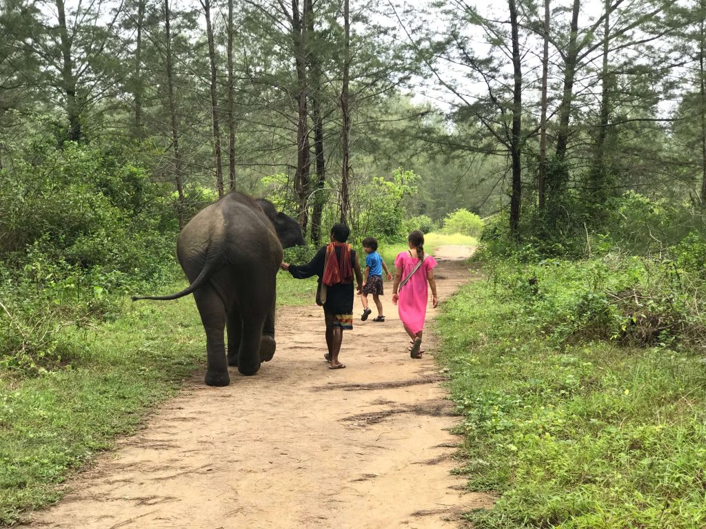 thailand elephant experience