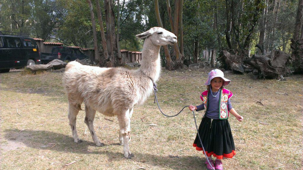 alpaca vs llamas