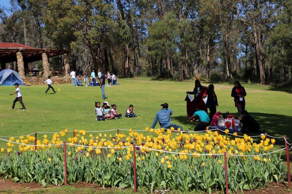 araluen tulip festival