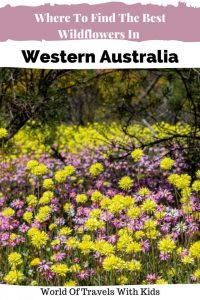 Where To Find The Best Wildflowers In Western Australia