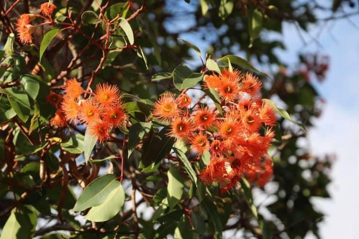 wildflowers peaceful bay western australia