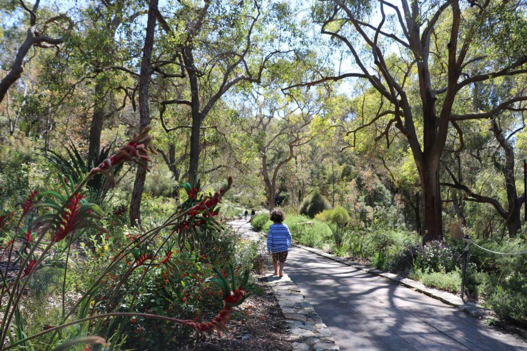 Kings Park Walking Trails