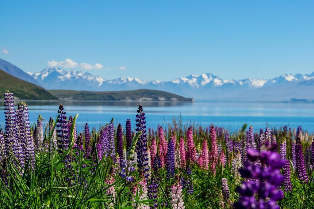 Interesting Facts About New Zealand For Kids