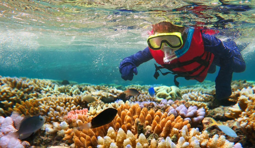 Reef Tours Cairns