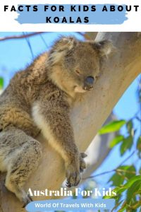 Interesting Facts For Kids About Koalas