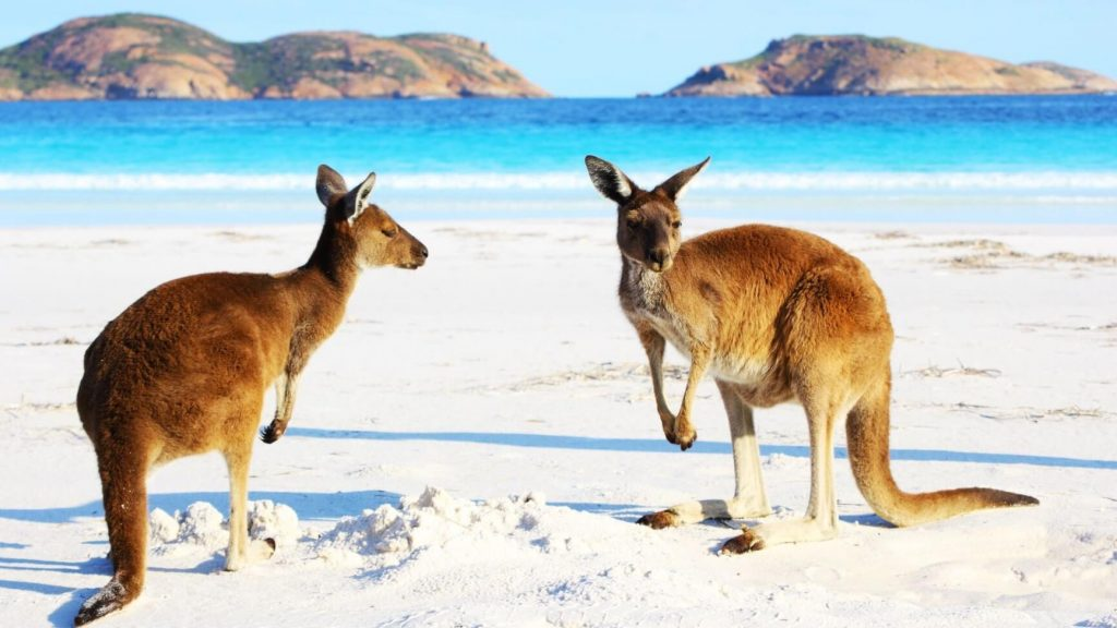 Facts About Kangaroos For Kids