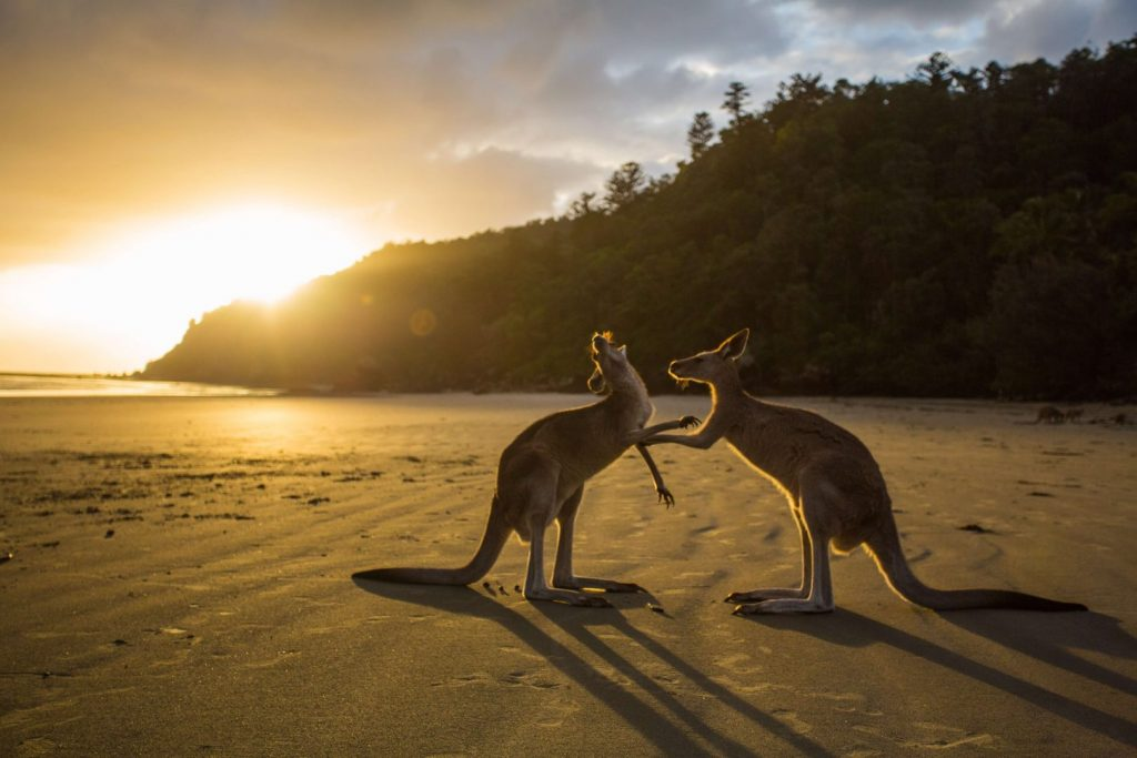 funniest kids facts about kangaroos
