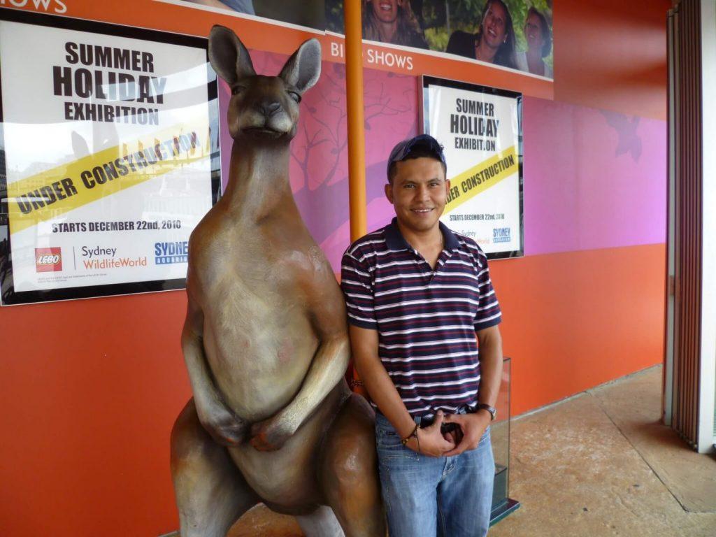 kangaroo fact kids