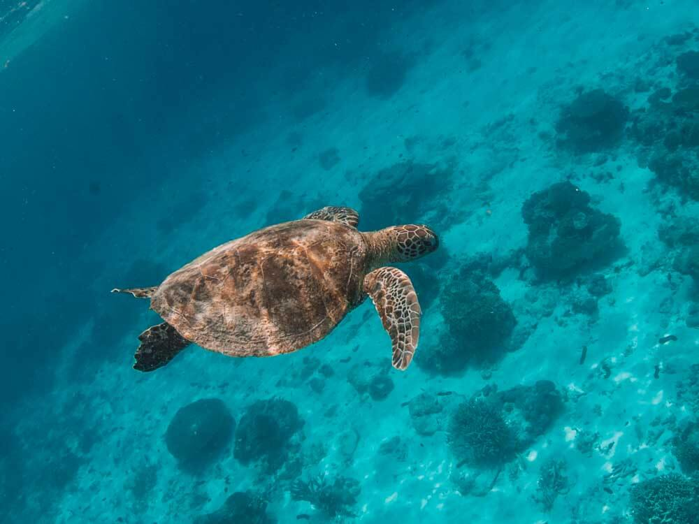Cruises to the Great Barrier Reef
