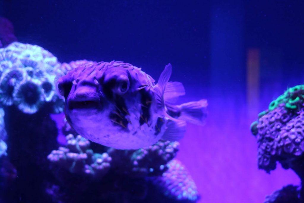 AQWA Perth Aquarium