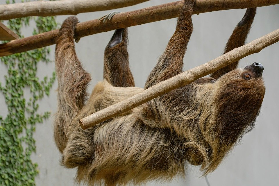 Sloth Gifts For Kids