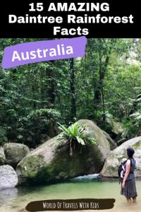15 AMAZING Daintree Rainforest Facts Get Ready to be Wowed 1
