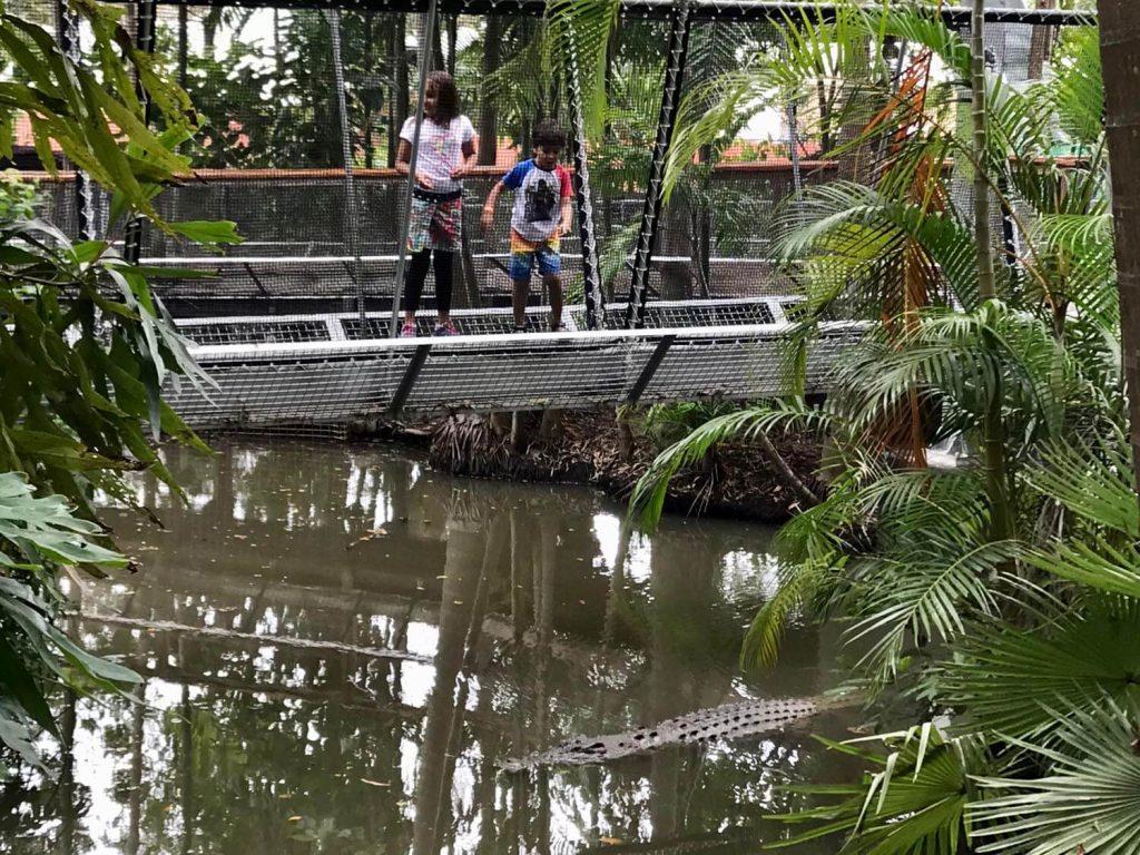 Primitive Daintree Rainforest Plants