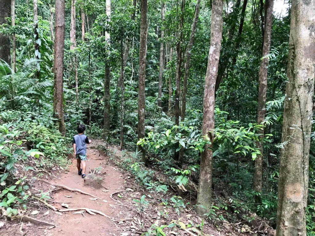 15 AMAZING Daintree Rainforest Facts