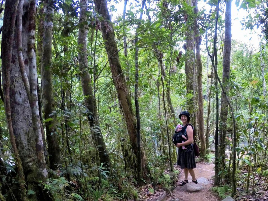fascinating Daintree Rainforest facts