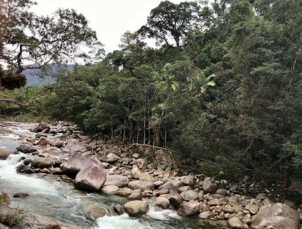 Amazing Facts On Daintree Rainforest Animals